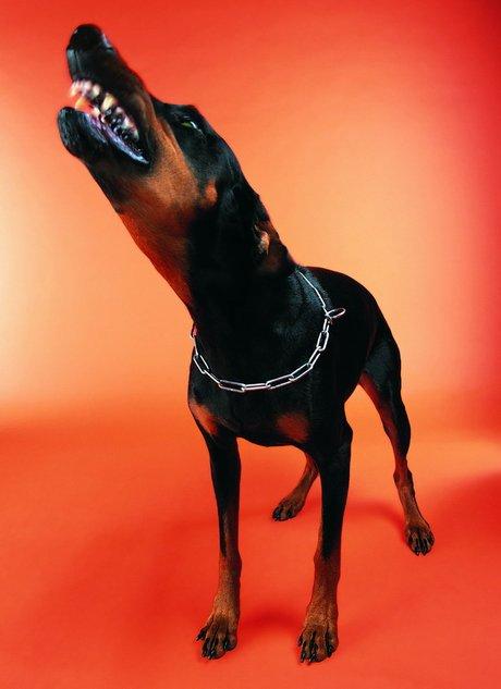 大黑狗与美女-播放_女人和大黑狗做图片_360图片