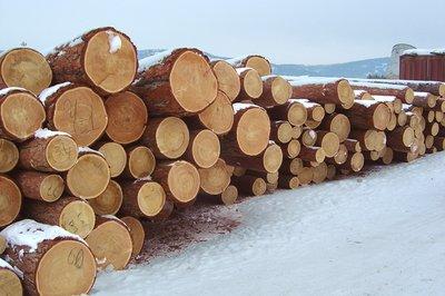 木材的基础知识-第3张图片