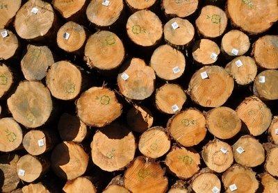 木材的基础知识-第2张图片