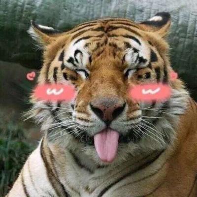 蠢萌头像动物搞笑图片 猫狗逗逼图片大合集