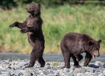 笑到停不下来,2019 搞笑野生动物摄影大赛入围