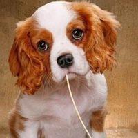 微信动物搞笑头像 - 健康图片库