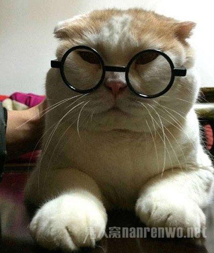 搞笑动物图片 看我新买的眼镜好看吗?
