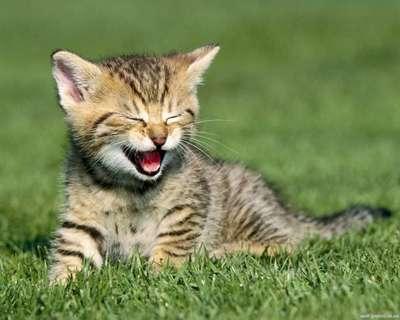 搞笑动物图片猫