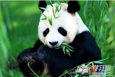 可爱搞笑动物图片高清壁纸