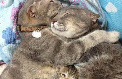 笑的无法自拔的动物搞笑图片