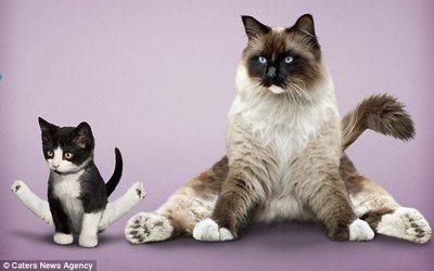 趣图:搞笑的动物瑜伽 (12)