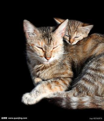 动物搞笑图片大全可爱|动物睡觉搞笑图片