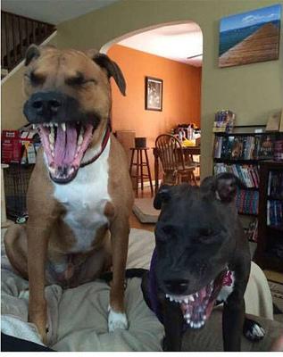 动物搞笑图片大全可爱|胖动物搞笑图片