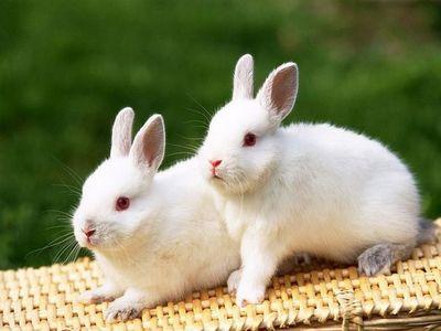 可爱兔子图片,值得收藏_搞笑动物图片,搞笑图