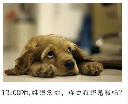 可爱狗狗带字图片,我并不觉得这有多疯狂,也不