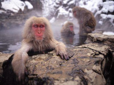 猴子搞笑图片|搞笑猴子图片头像微信 (第1页)