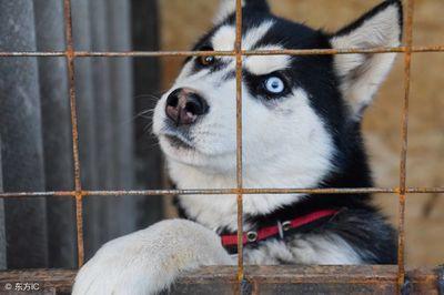动物搞笑图片,这二哈够纯的
