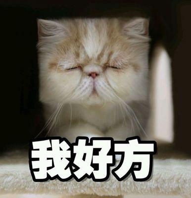 小动物猫咪头像图片微信头像 qq聊天可爱小表