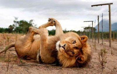 【动物萌图搞笑图片】动物萌图搞笑图